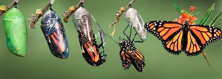 Lagarta-e-borboleta